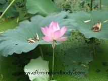 lotus rexized